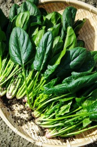 old testament heavenly vegetables spinach