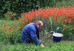 gardener-weeding-pixabay